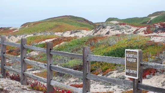 Worldmark Monterey Marina Dunes at Sanctuary Beach Beach Dunes